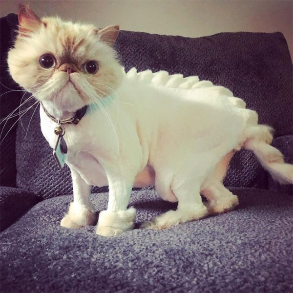 Apparently Creative Cat Haircuts Are A Thing Now Being